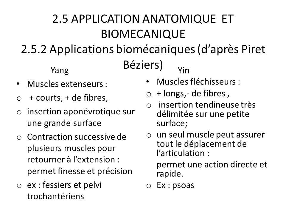 2.5 APPLICATION ANATOMIQUE ET BIOMECANIQUE 2.5.2 Applications biomécaniques (d'après Piret Béziers) Yang Muscles extenseurs : o + courts, + de fibres,