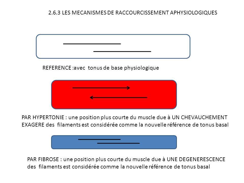 2.6.3 LES MECANISMES DE RACCOURCISSEMENT APHYSIOLOGIQUES REFERENCE :avec tonus de base physiologique PAR HYPERTONIE : une position plus courte du musc