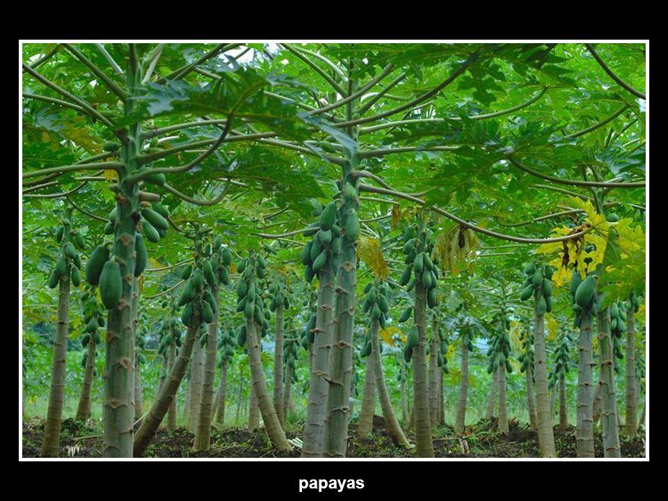 Jungles of Costa Rica