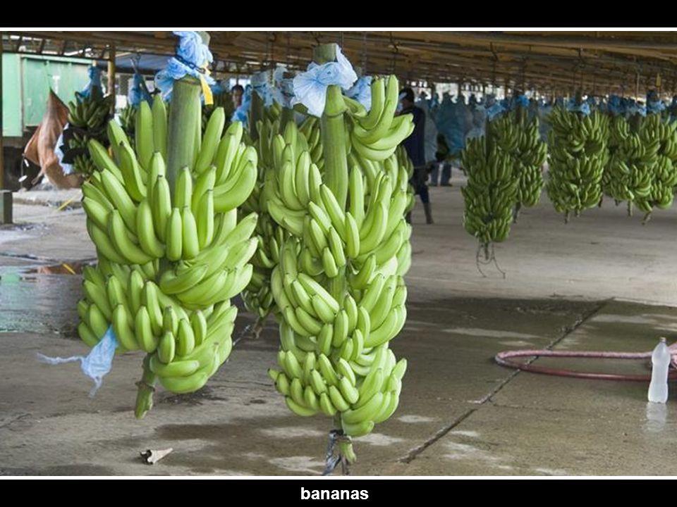 flower of banana
