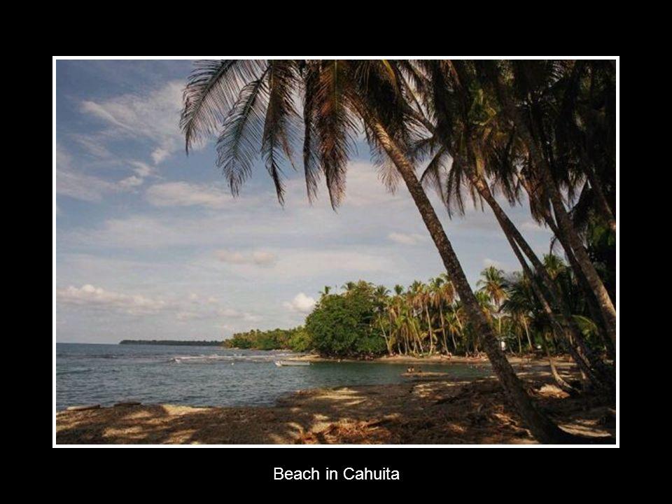 Beach in Cahuita