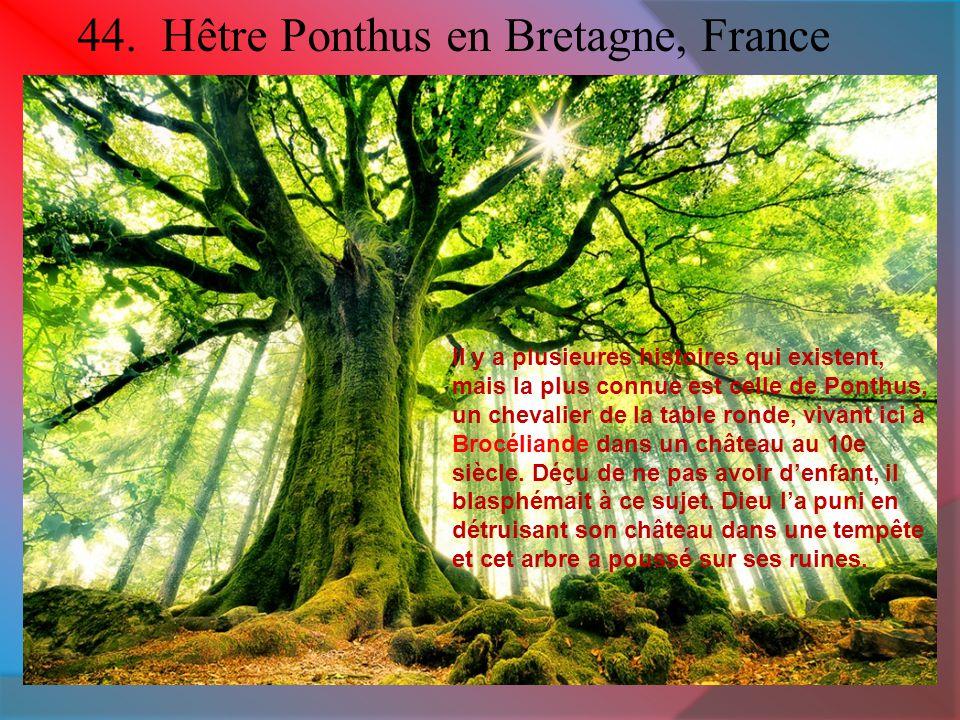 44. Hêtre Ponthus en Bretagne, France Il y a plusieures histoires qui existent, mais la plus connue est celle de Ponthus, un chevalier de la table ron