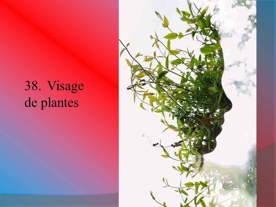 38.Visage de plantes