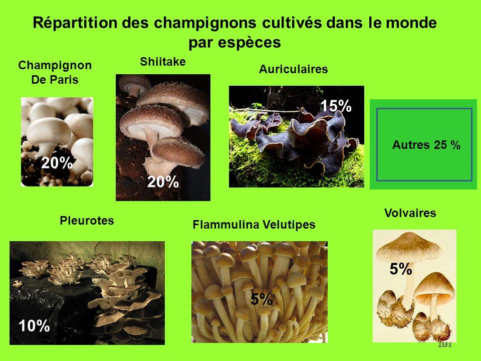 101 Répartition des champignons cultivés dans le monde par espèces 20% 5% 10% 5% Autres 25 % 15% Flammulina Velutipes Pleurotes Champignon De Paris Sh