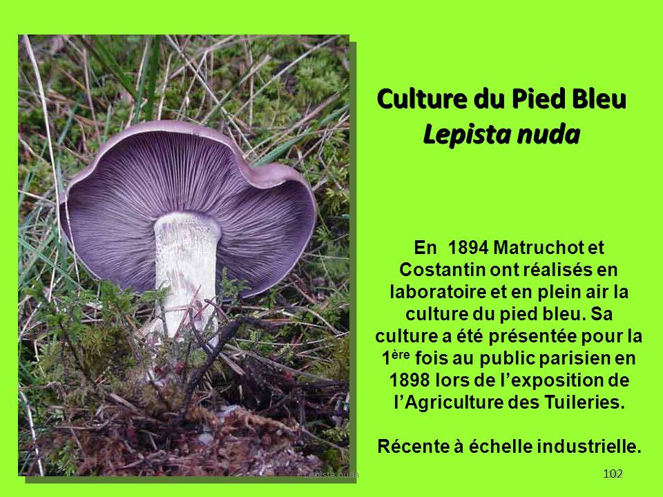 102 Culture du Pied Bleu Lepista nuda En 1894 Matruchot et Costantin ont réalisés en laboratoire et en plein air la culture du pied bleu. Sa culture a