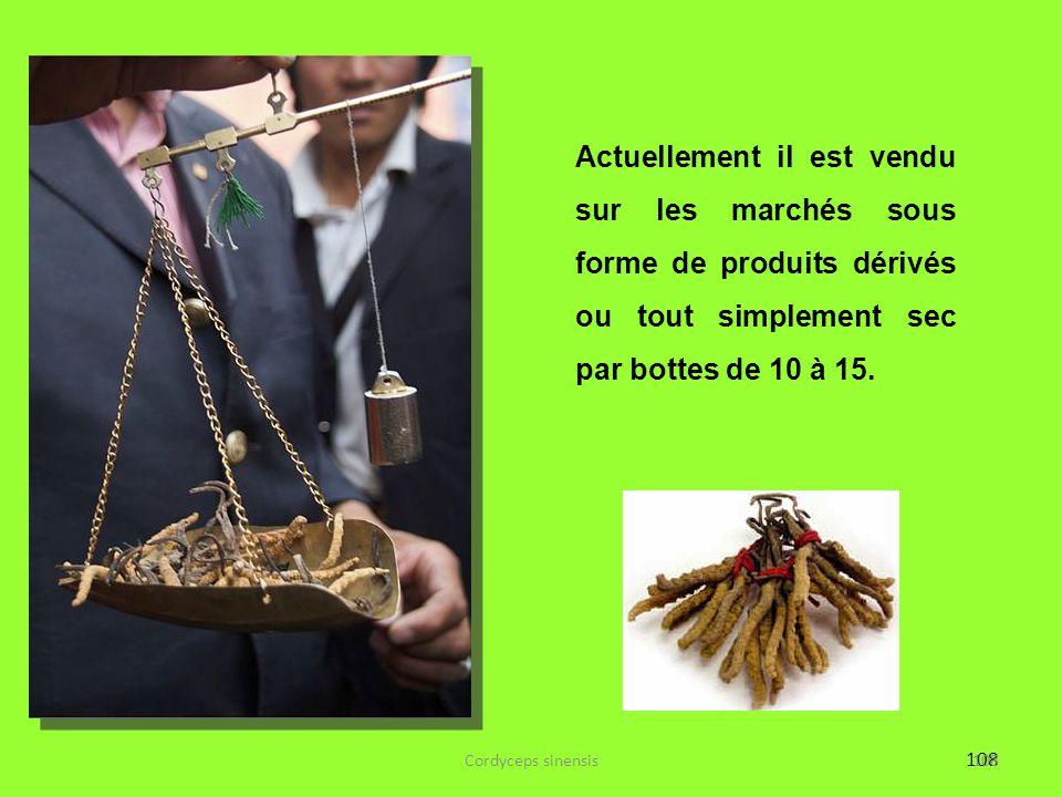 108 Actuellement il est vendu sur les marchés sous forme de produits dérivés ou tout simplement sec par bottes de 10 à 15. 108Cordyceps sinensis