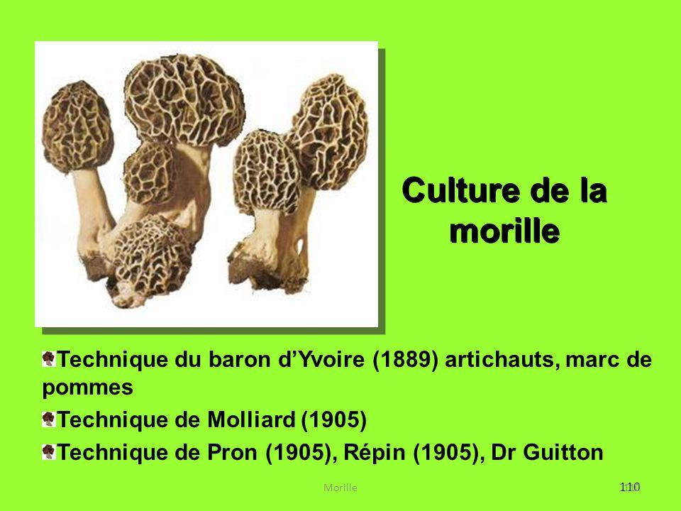 110 Culture de la morille Technique du baron d'Yvoire (1889) artichauts, marc de pommes Technique de Molliard (1905) Technique de Pron (1905), Répin (