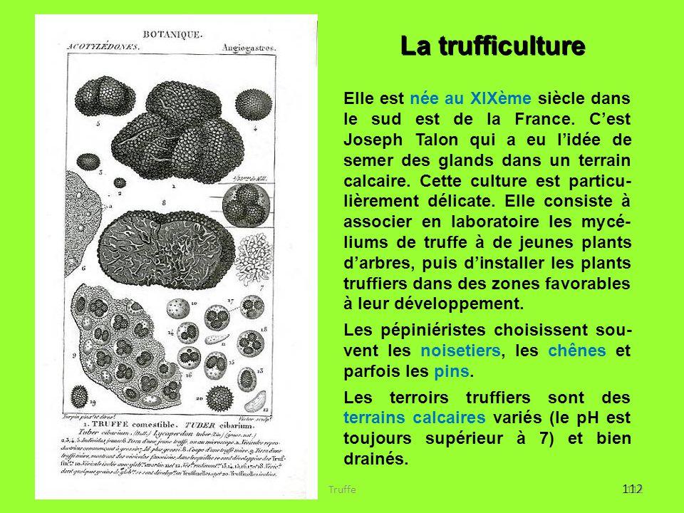 112 La trufficulture Elle est née au XIXème siècle dans le sud est de la France. C'est Joseph Talon qui a eu l'idée de semer des glands dans un terrai