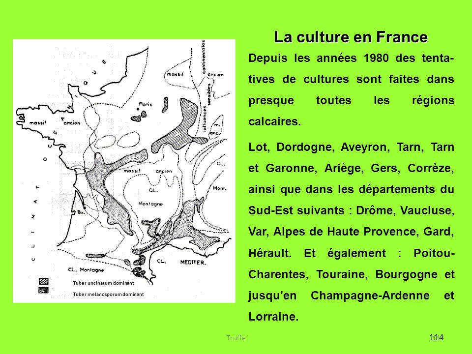 114 Tuber uncinatum dominant Tuber melanosporum dominant La culture en France Depuis les années 1980 des tenta- tives de cultures sont faites dans pre