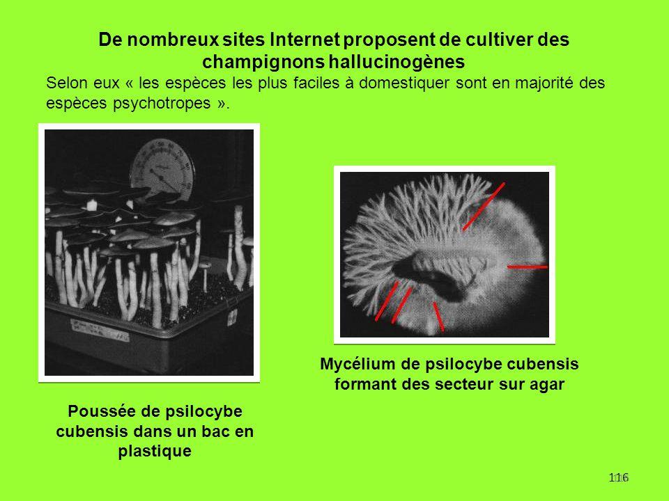 116 De nombreux sites Internet proposent de cultiver des champignons hallucinogènes Selon eux « les espèces les plus faciles à domestiquer sont en maj