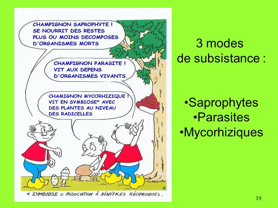 19 3 modes de subsistance : Saprophytes Parasites Mycorhiziques