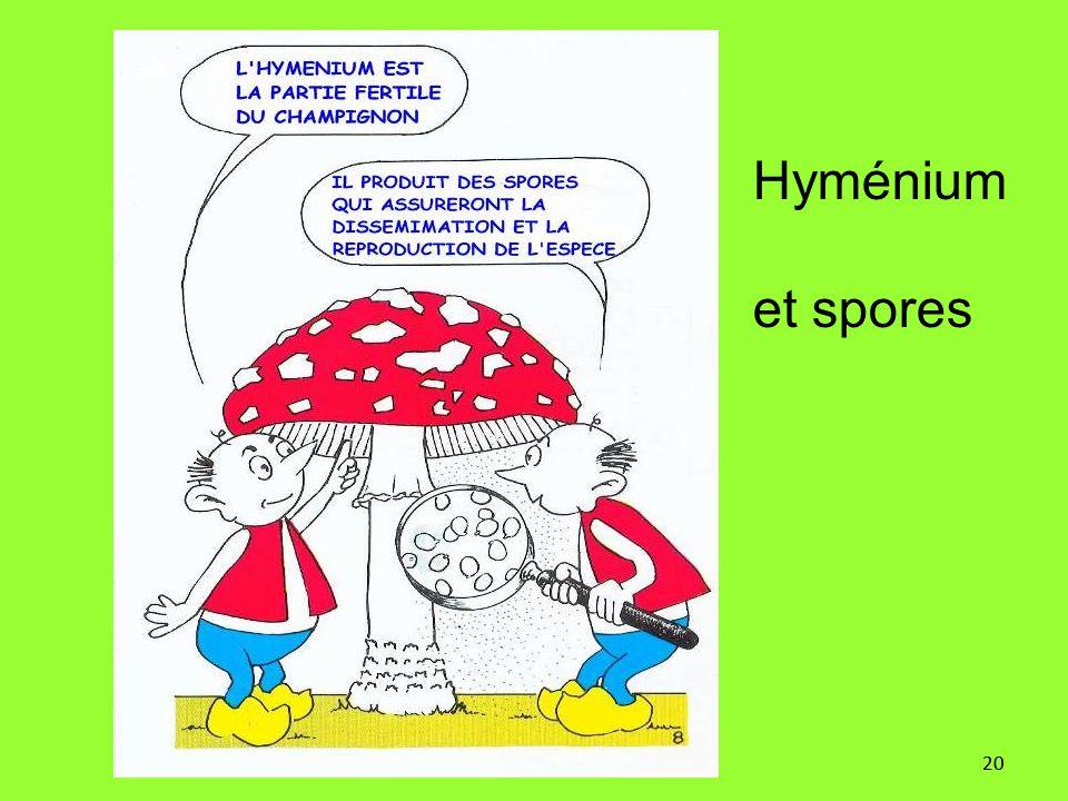 20 Hyménium et spores