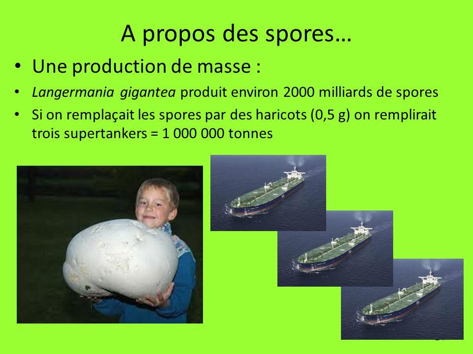 24 A propos des spores… Une production de masse : Langermania gigantea produit environ 2000 milliards de spores Si on remplaçait les spores par des ha