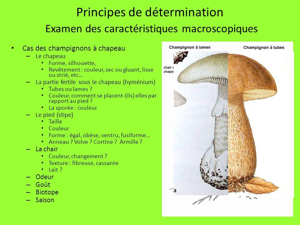 30 Principes de détermination Examen des caractéristiques macroscopiques Cas des champignons à chapeau – Le chapeau Forme, silhouette, Revêtement : co