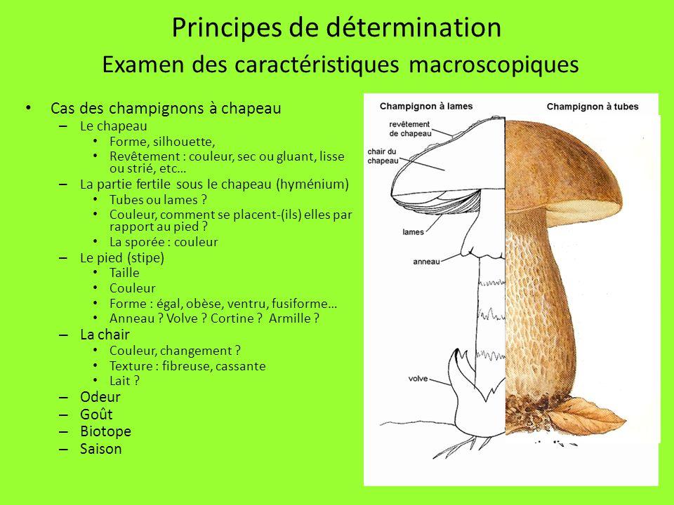 31 Principes de détermination Examen des caractéristiques macroscopiques Cas des champignons à chapeau – Le chapeau Forme, silhouette, Revêtement : co