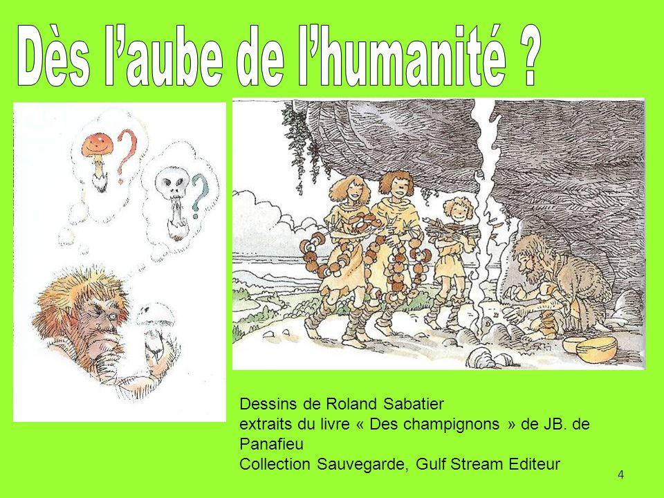 4 Dessins de Roland Sabatier extraits du livre « Des champignons » de JB. de Panafieu Collection Sauvegarde, Gulf Stream Editeur