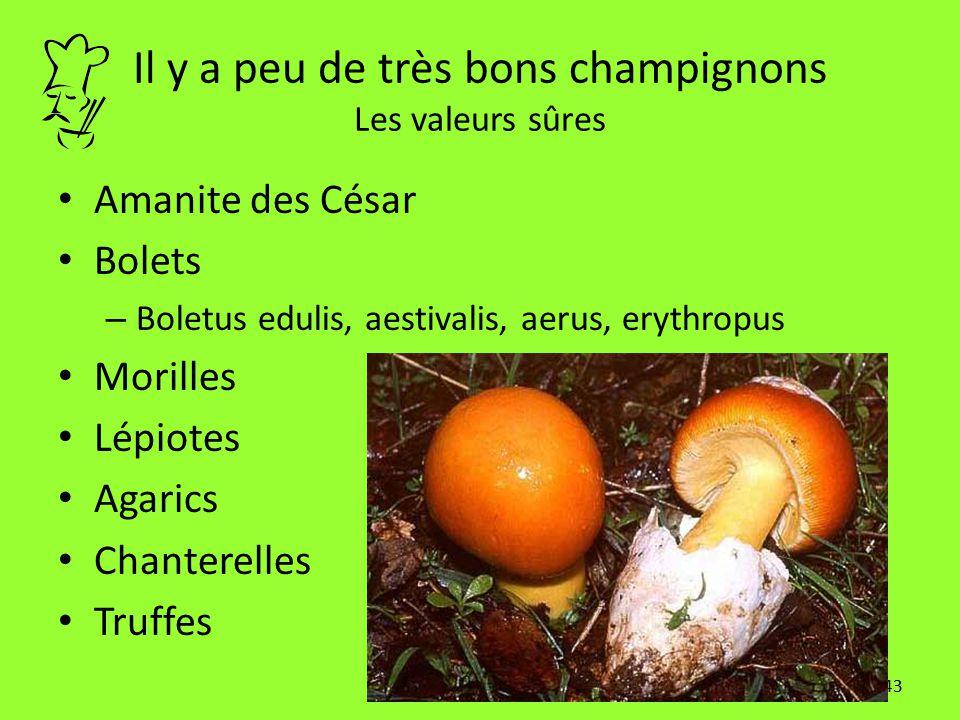 43 Il y a peu de très bons champignons Les valeurs sûres Amanite des César Bolets – Boletus edulis, aestivalis, aerus, erythropus Morilles Lépiotes Ag