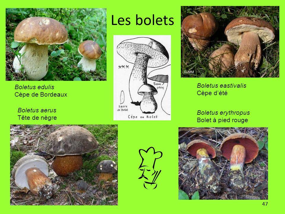 47 Les bolets Boletus edulis Cèpe de Bordeaux Boletus erythropus Bolet à pied rouge Boletus aerus Tête de nègre Boletus eastivalis Cèpe d'été