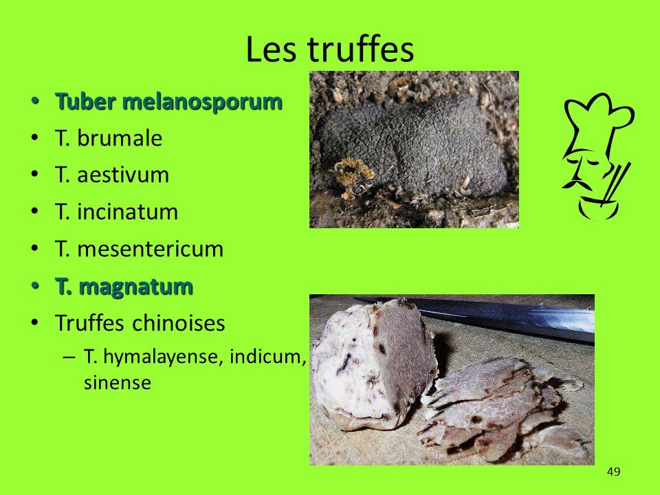 49 Les truffes Tuber melanosporum Tuber melanosporum T. brumale T. aestivum T. incinatum T. mesentericum T. magnatum T. magnatum Truffes chinoises – T