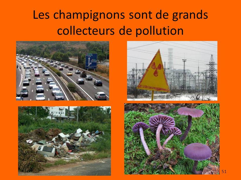 51 Les champignons sont de grands collecteurs de pollution