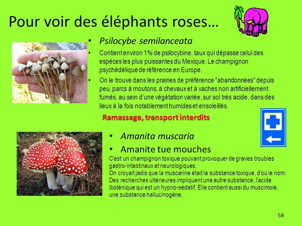 58 Pour voir des éléphants roses… Psilocybe semilanceata Contient environ 1% de psilocybine, taux qui dépasse celui des espèces les plus puissantes du