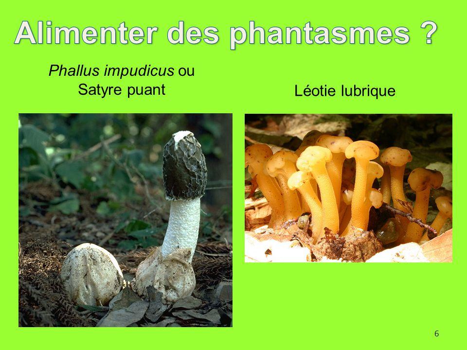 6 Phallus impudicus ou Satyre puant Léotie lubrique