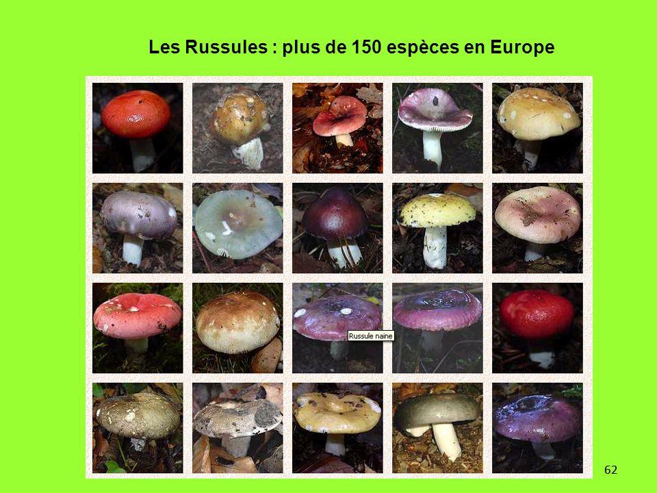 62 Les Russules : plus de 150 espèces en Europe