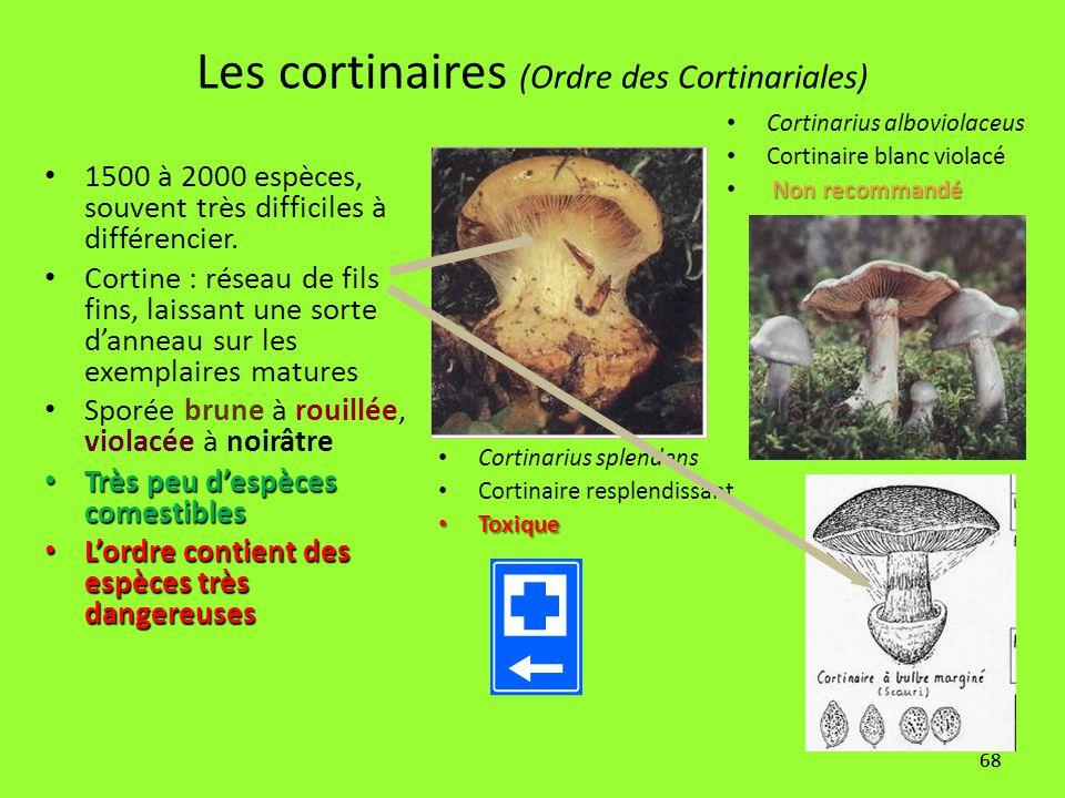 68 Les cortinaires (Ordre des Cortinariales) 1500 à 2000 espèces, souvent très difficiles à différencier. Cortine : réseau de fils fins, laissant une