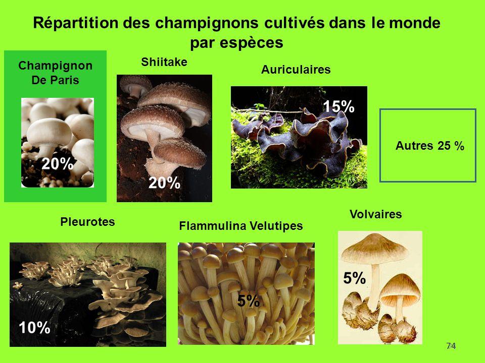 74 Répartition des champignons cultivés dans le monde par espèces 20% 5% 10% 5% Autres 25 % 15% Flammulina Velutipes Pleurotes Champignon De Paris Shi