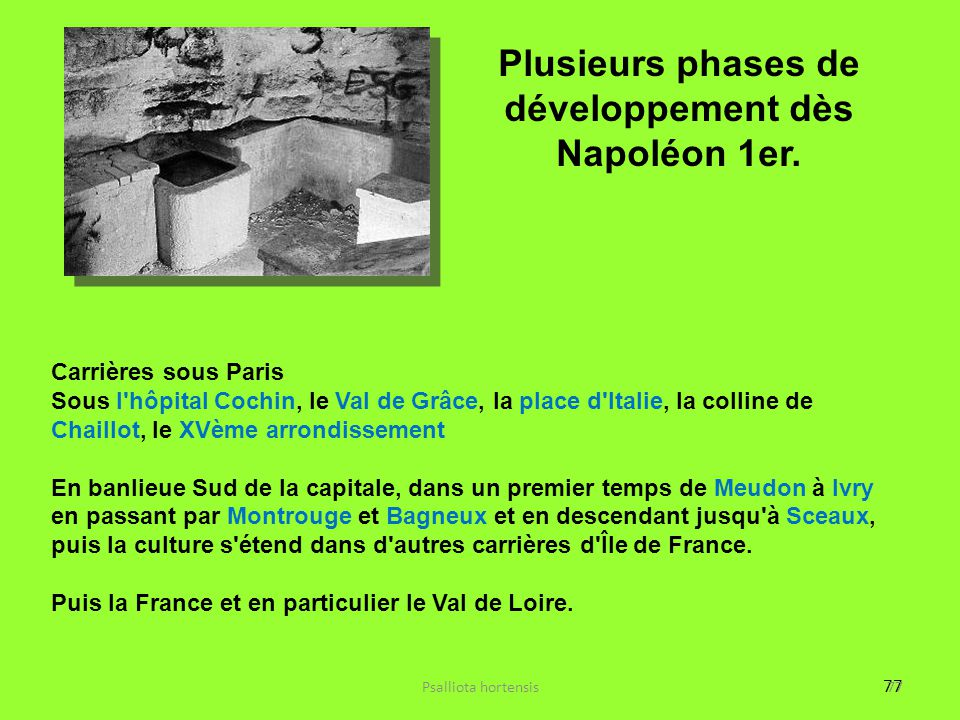 77 Psalliota hortensis77 Carrières sous Paris Sous l'hôpital Cochin, le Val de Grâce, la place d'Italie, la colline de Chaillot, le XVème arrondisseme