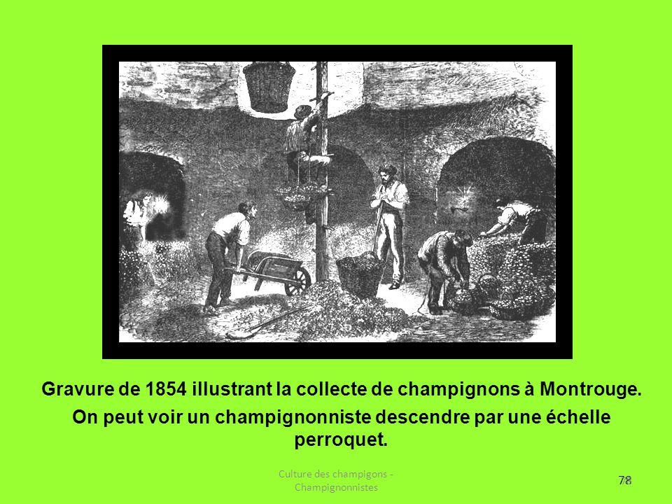 78 Gravure de 1854 illustrant la collecte de champignons à Montrouge. On peut voir un champignonniste descendre par une échelle perroquet. Culture des