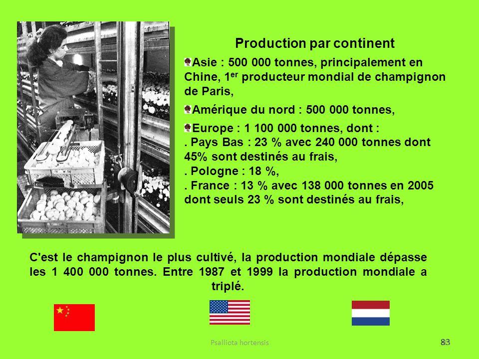 83 Production par continent Asie : 500 000 tonnes, principalement en Chine, 1 er producteur mondial de champignon de Paris, Amérique du nord : 500 000