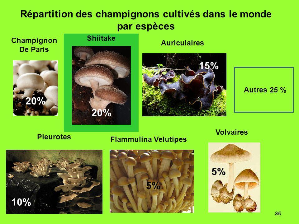 86 Répartition des champignons cultivés dans le monde par espèces 20% 5% 10% 5% Autres 25 % 15% Flammulina Velutipes Pleurotes Champignon De Paris Shi