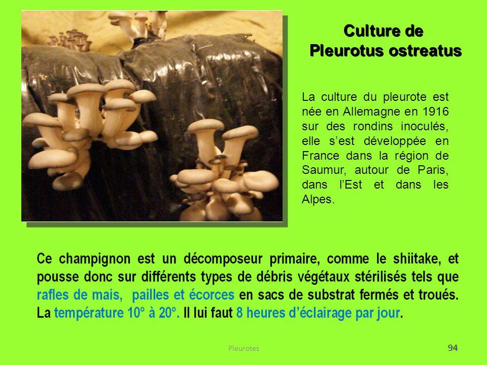 94 La culture du pleurote est née en Allemagne en 1916 sur des rondins inoculés, elle s'est développée en France dans la région de Saumur, autour de P