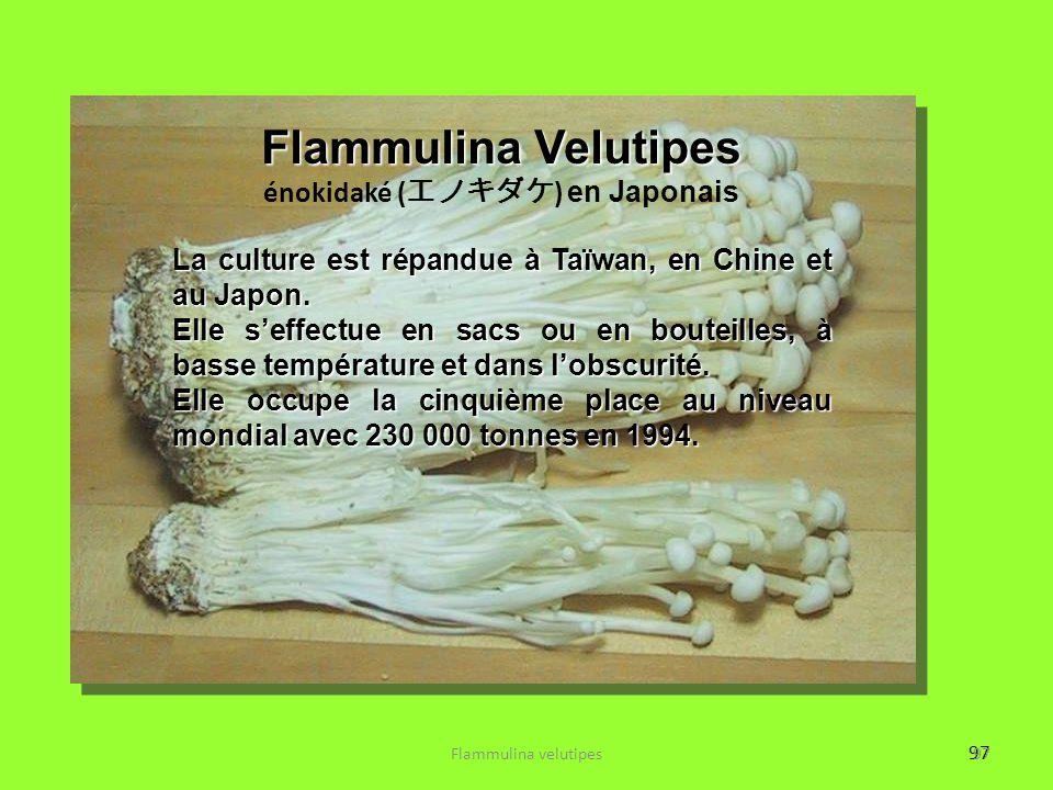 97 Flammulina Velutipes énokidaké ( エノキダケ ) en Japonais La culture est répandue à Taïwan, en Chine et au Japon. Elle s'effectue en sacs ou en bouteill