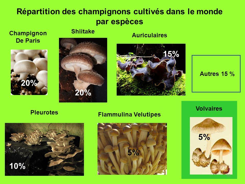 99 Répartition des champignons cultivés dans le monde par espèces 20% 5% 10% 5% Autres 15 % 15% Flammulina Velutipes Pleurotes Champignon De Paris Shi