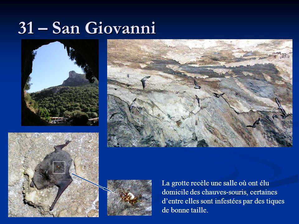31 – San Giovanni La grotte recèle une salle où ont élu domicile des chauves-souris, certaines d'entre elles sont infestées par des tiques de bonne ta
