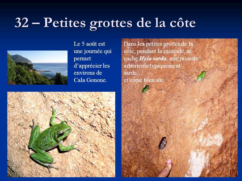32 – Petites grottes de la côte Dans les petites grottes de la côte, pendant la canicule, se cache Hyla sarda, une rainette arboricole typiquement sar
