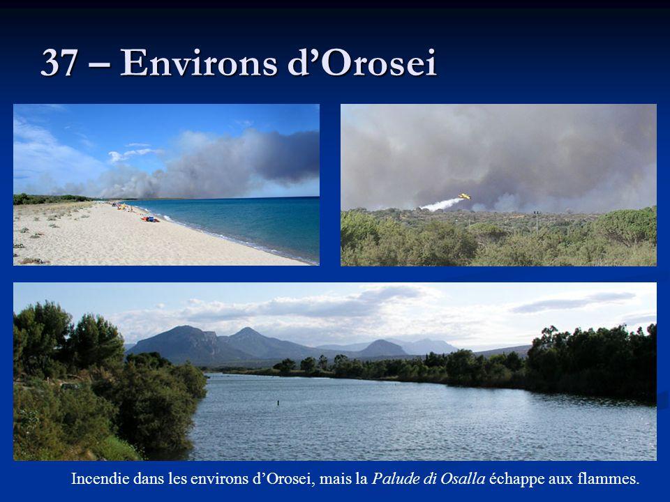 37 – Environs d'Orosei Incendie dans les environs d'Orosei, mais la Palude di Osalla échappe aux flammes.