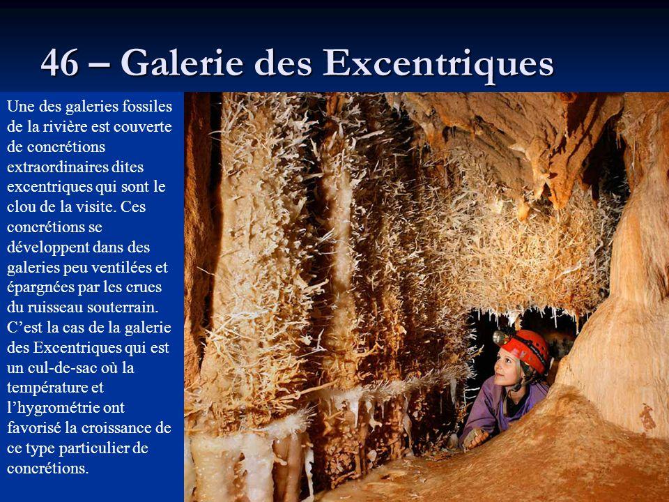 46 – Galerie des Excentriques Une des galeries fossiles de la rivière est couverte de concrétions extraordinaires dites excentriques qui sont le clou