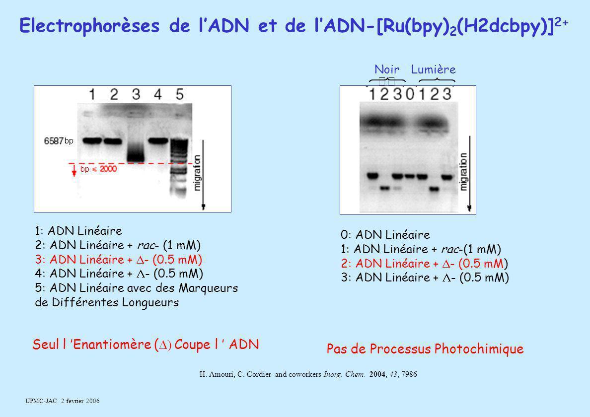 UPMC-JAC 2 fevrier 2006 1: ADN Linéaire 2: ADN Linéaire + rac- (1 mM) 3: ADN Linéaire +  - (0.5 mM) 4: ADN Linéaire +  - (0.5 mM) 5: ADN Linéaire av