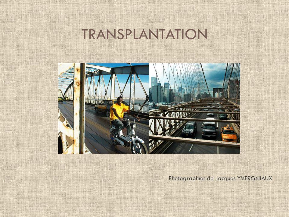TRANSPLANTATION Photographies de Jacques YVERGNIAUX