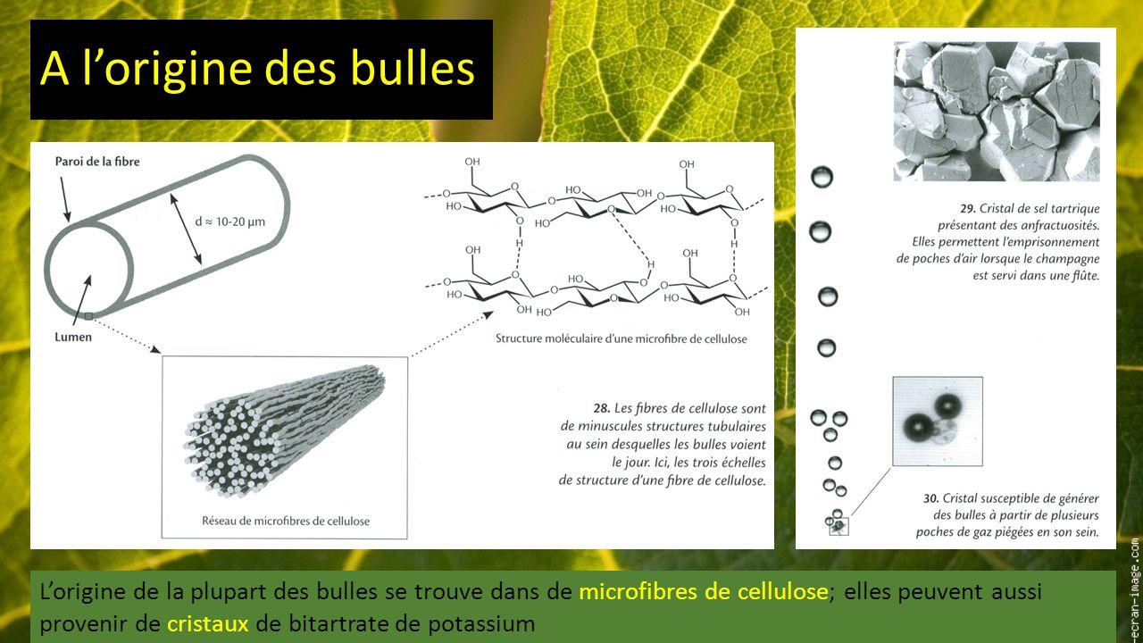A l'origine des bulles L'origine de la plupart des bulles se trouve dans de microfibres de cellulose; elles peuvent aussi provenir de cristaux de bitartrate de potassium