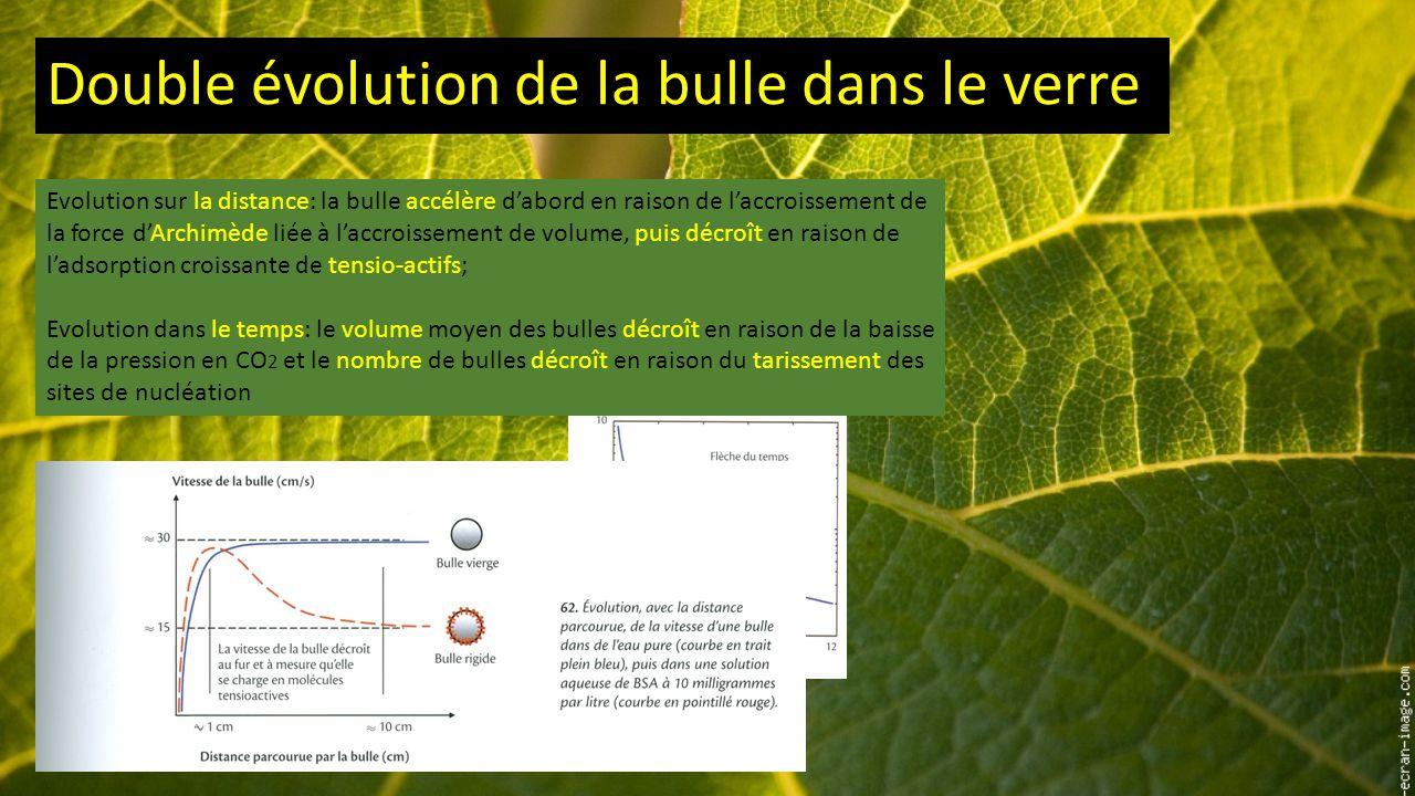 Double évolution de la bulle dans le verre Evolution sur la distance: la bulle accélère d'abord en raison de l'accroissement de la force d'Archimède liée à l'accroissement de volume, puis décroît en raison de l'adsorption croissante de tensio-actifs; Evolution dans le temps: le volume moyen des bulles décroît en raison de la baisse de la pression en CO 2 et le nombre de bulles décroît en raison du tarissement des sites de nucléation