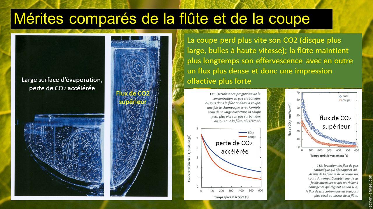 Mérites comparés de la flûte et de la coupe La coupe perd plus vite son CO2 (disque plus large, bulles à haute vitesse); la flûte maintient plus longtemps son effervescence avec en outre un flux plus dense et donc une impression olfactive plus forte Large surface d'évaporation, perte de CO 2 accélérée Flux de CO2 supérieur perte de CO 2 accélérée flux de CO 2 supérieur