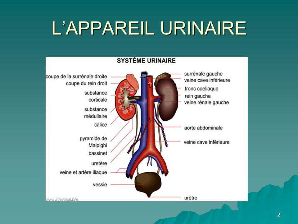 3  Le haut appareil urinaire (les deux reins, les deux uretères)  Le bas appareil urinaire (vessie et urètre).