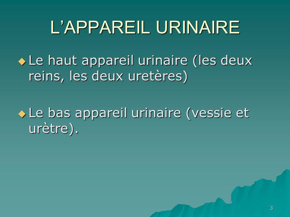 4 L'appareil urinaire est constitué d'organes qui excrètent l'urine.