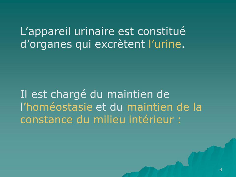5 LE BAS APPAREIL URINAIRE  LA VESSIE  L'URETRE