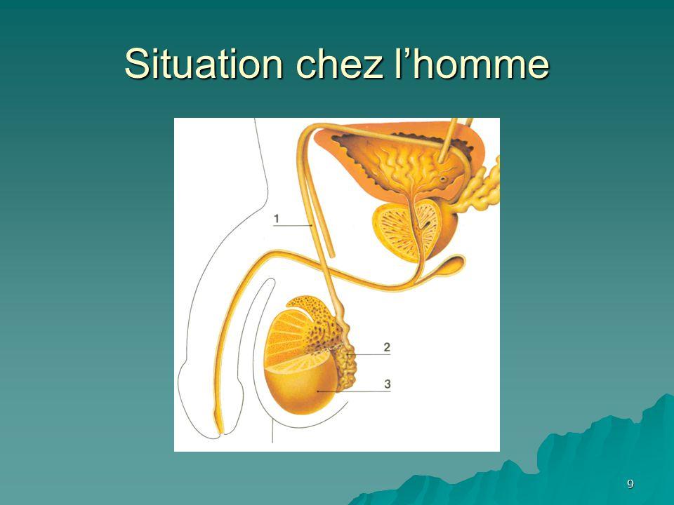 20 Contrôle neurologique Mécanorécepteurs de la vessie Influx nerveux Moelle épinière Désir conscient d'uriner Réflexe de la miction Relâchement du sphincter externe Contraction du détrusor Relâchement du sphincter interne