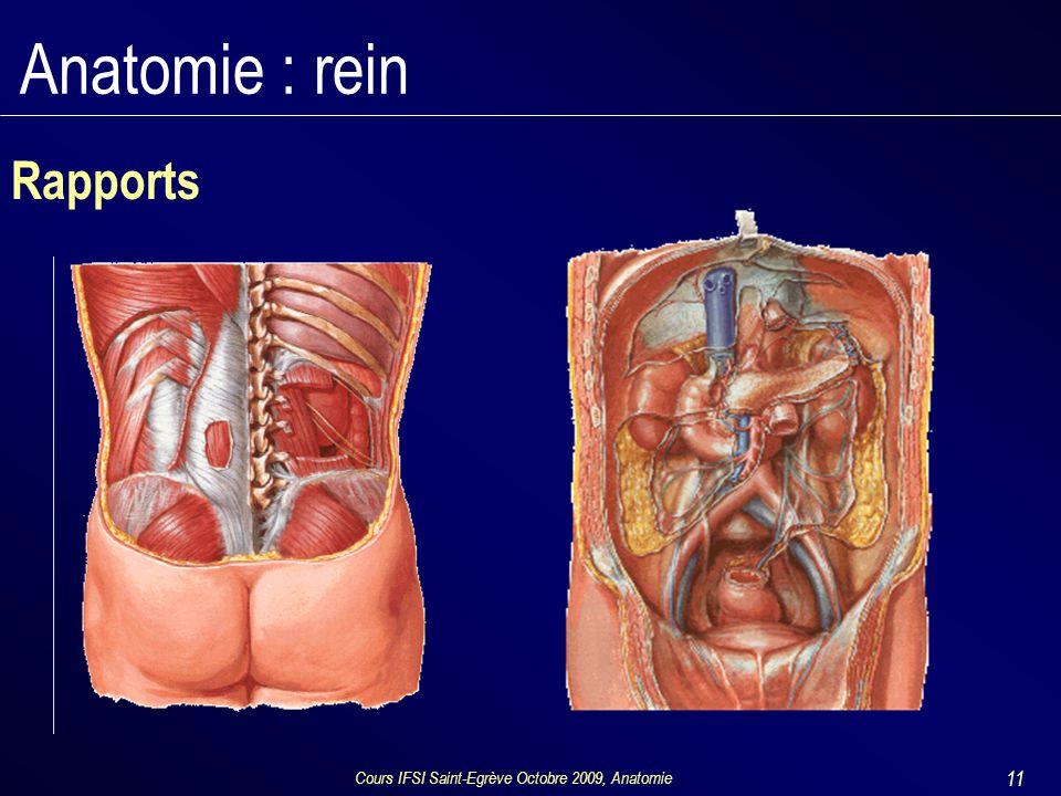 Cours IFSI Saint-Egrève Octobre 2009, Anatomie 11 Anatomie : rein Rapports